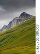Aversertal Graubünden, Schweiz / Marmot (Marmota marmota), Grison... Стоковое фото, фотограф Zoonar.com/Günter Lenz / age Fotostock / Фотобанк Лори