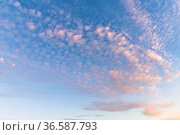 Colorful evening sky with pink clouds on a sunset. Стоковое фото, фотограф EugeneSergeev / Фотобанк Лори