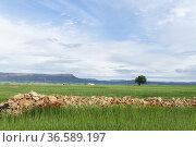 Poppy fields (Papaver rhoeas). Almansa. Albacete Castilla-La Mancha... Стоковое фото, фотограф Antonio Real / age Fotostock / Фотобанк Лори