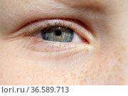 Auge, Lid, iris, Maedchenauge. Стоковое фото, фотограф Zoonar.com/Manfred Ruckszio / age Fotostock / Фотобанк Лори