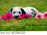 ESY-059795873. Стоковое фото, фотограф Zoonar.com/Judith Dzierzawa / easy Fotostock / Фотобанк Лори