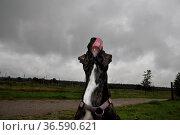 Hündin, hund, haustier, tier, mischling, mischlingshund, mischlingshündin... Стоковое фото, фотограф Zoonar.com/Volker Rauch / easy Fotostock / Фотобанк Лори
