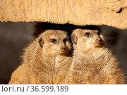 ZON-2142750. Стоковое фото, фотограф Zoonar.com/Heinrich Fuchs / age Fotostock / Фотобанк Лори