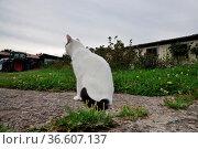 Katze, kätzchen, haustier, garten, schwarz-weiß, schwarzweiß, zweifarbig... Стоковое фото, фотограф Zoonar.com/Volker Rauch / easy Fotostock / Фотобанк Лори