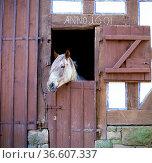 Pferdekopf, Stalltuere. Стоковое фото, фотограф Zoonar.com/Manfred Ruckszio / age Fotostock / Фотобанк Лори