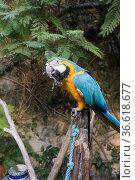 Papagei, Foto: Robert B. Fishman, 2.11.2014. Стоковое фото, фотограф Zoonar.com/Robert B. Fishman / age Fotostock / Фотобанк Лори