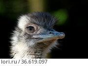 ZON-4408453. Стоковое фото, фотограф Zoonar.com/heinrich fuchs / age Fotostock / Фотобанк Лори