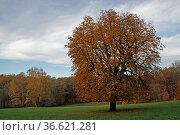Wiese an den Externsteinen. Стоковое фото, фотограф Zoonar.com/Martina Berg / easy Fotostock / Фотобанк Лори