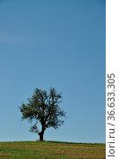 Baum, Feld, acker,wiese, himmel, landschaft, sommer, spätsommer. Стоковое фото, фотограф Zoonar.com/Volker Rauch / easy Fotostock / Фотобанк Лори
