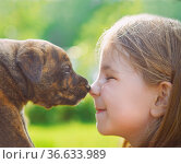 Little girl with a puppy. Nose to nose. Стоковое фото, фотограф Zoonar.com/Dasha Petrenko / easy Fotostock / Фотобанк Лори