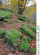Herbstwald, wald, herbst, baum, bäume, fels, felsen, moos, stein,... Стоковое фото, фотограф Zoonar.com/Volker Rauch / easy Fotostock / Фотобанк Лори