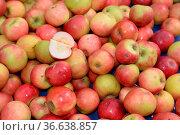 Äpfel, apfel, obst, frucht, früchte, ernte, ernten, apfelernte, obsternte... Стоковое фото, фотограф Zoonar.com/Volker Rauch / easy Fotostock / Фотобанк Лори