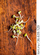 Sprouted green mung beans. Mung sprouts on wooden table. Стоковое фото, фотограф Zoonar.com/JIRI HERA / easy Fotostock / Фотобанк Лори