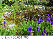 Gartenteich, Стоковое фото, фотограф Zoonar.com/Manfred Ruckszio / age Fotostock / Фотобанк Лори