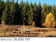 Kühe auf der Weide. Стоковое фото, фотограф Zoonar.com/Daniel Kühne / age Fotostock / Фотобанк Лори