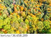 Bäume Baum Wald im Herbst bunte Blätter Jahreszeit Drohne Luftbild... Стоковое фото, фотограф Zoonar.com/Markus Mainka / age Fotostock / Фотобанк Лори