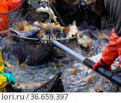 Abfischen - to fish dry 10. Стоковое фото, фотограф Zoonar.com/Liane Matrisch / easy Fotostock / Фотобанк Лори