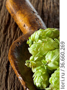Sehr alte Getreideschaufel mit Hopfendolden liegt auf rustikalem Holzuntergrund... Стоковое фото, фотограф Zoonar.com/Thomas Klee / easy Fotostock / Фотобанк Лори