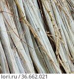 Trockene Stengel - dry stems 02. Стоковое фото, фотограф Zoonar.com/LIANEM / easy Fotostock / Фотобанк Лори