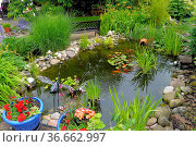 Gartenteich mit Goldfischen, Blumentöpfe, Gartendeko. Стоковое фото, фотограф Zoonar.com/Bildagentur Geduldig / easy Fotostock / Фотобанк Лори