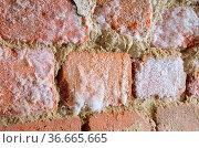 Wand mit Schimmel - wall with mould fungus 01. Стоковое фото, фотограф Zoonar.com/LIANEM / easy Fotostock / Фотобанк Лори
