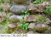 Natursteinmauer - natural stone wall 03. Стоковое фото, фотограф Zoonar.com/LIANEM / easy Fotostock / Фотобанк Лори