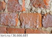 Wand mit Schimmel - wall with mould fungus 02. Стоковое фото, фотограф Zoonar.com/LIANEM / easy Fotostock / Фотобанк Лори