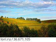 BW. bei Sulzfeld bunte Weinberge im Herbst , Fichtenbäume, Kraichgau, Стоковое фото, фотограф Zoonar.com/Bildagentur Geduldig / easy Fotostock / Фотобанк Лори