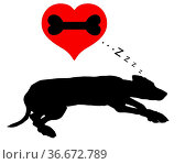 Hund träumt von Knochen - Dog dreams of bones. Стоковое фото, фотограф Zoonar.com/lantapix / easy Fotostock / Фотобанк Лори