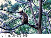 Monkey in cute treecape on the background of rainforested mountains... Стоковое фото, фотограф Zoonar.com/Maximilian Buzun / easy Fotostock / Фотобанк Лори