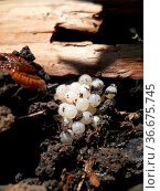 Schneckeneier. Стоковое фото, фотограф Zoonar.com/Joerg Mikus/TAP / age Fotostock / Фотобанк Лори