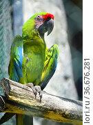 Macaw parrot, Beauval zoo, Saint Aignan, France. Стоковое фото, фотограф Frederic Soreau / age Fotostock / Фотобанк Лори