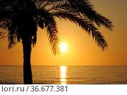 Palme, Baum, Morgendämmerung, morgen , himmel, sonne, morgenhimmel... Стоковое фото, фотограф Zoonar.com/Volker Rauch / easy Fotostock / Фотобанк Лори