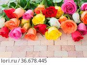 Frische bunte Rosen auf rustikalem Hintergrund aus Stein. Стоковое фото, фотограф Zoonar.com/Barbara Neveu / easy Fotostock / Фотобанк Лори