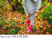 A girl in rubber boots holds a rake and rakes the fallen leaves. Стоковое фото, фотограф Zoonar.com/Sergiy Artsaba / easy Fotostock / Фотобанк Лори
