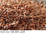 Linum usitatissimum, Lein, flax, Samen, seeds. Стоковое фото, фотограф Zoonar.com/Peter Himmelhuber / age Fotostock / Фотобанк Лори