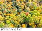 Wald Bäume Baum im Herbst bunte Blätter Jahreszeit Luftbild reise. Стоковое фото, фотограф Zoonar.com/Markus Mainka / easy Fotostock / Фотобанк Лори