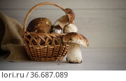 Heap of fresh harvested forest mushrooms in basket. Стоковое видео, видеограф Peredniankina / Фотобанк Лори