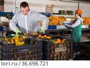 Employees controlling quality of tangerines. Стоковое фото, фотограф Яков Филимонов / Фотобанк Лори