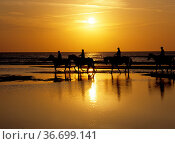 Reiter am Meer, Sonnenuntergang an der Nordsee. Стоковое фото, фотограф Zoonar.com/Manfred Ruckszio / age Fotostock / Фотобанк Лори