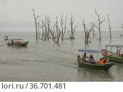 Taking a tour around mangrove trees at Bako National Park Sarawak... (2015 год). Редакционное фото, фотограф Chua Wee Boo / age Fotostock / Фотобанк Лори
