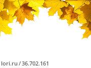 Herbst und Herbstlaub mit Blätter. Стоковое фото, фотограф Zoonar.com/Wolfilser / easy Fotostock / Фотобанк Лори