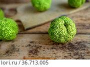 Früchte der Milchorange auf rustikalem Holzbrett. Стоковое фото, фотограф Zoonar.com/Nailia Schwarz / easy Fotostock / Фотобанк Лори