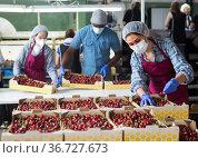 People with crates in cherry warehouse. Стоковое фото, фотограф Яков Филимонов / Фотобанк Лори