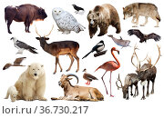 Set of bear and other european animals. Isolated on white background with shade. Стоковое фото, фотограф Яков Филимонов / Фотобанк Лори