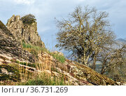 Holm oak and granite rocks at Muniana cliff. Madrid. Spain. Europe. Стоковое фото, фотограф María del Valle Martín Morales / age Fotostock / Фотобанк Лори