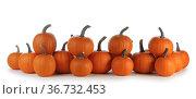 Pumpkins in a row isolated on white. Стоковое фото, фотограф Иван Михайлов / Фотобанк Лори