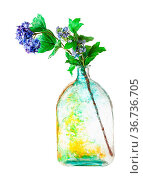 Artificial hortensia flowers in handpainted glass flask isolated on... Стоковое фото, фотограф Zoonar.com/Valery Voennyy / easy Fotostock / Фотобанк Лори