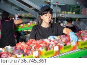 Team of workers sorting mangoes on conveyor belt in a factory. Стоковое фото, фотограф Яков Филимонов / Фотобанк Лори