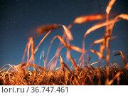 Belarus. 17 July 2020. Comet Neowise C 2020 F3 Shines Bright In The... Стоковое фото, фотограф Ryhor Bruyeu / easy Fotostock / Фотобанк Лори